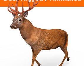 3D asset low-poly Deer rigged animated model model