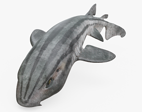 Striped Catshark Rigged 3D asset