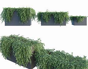 3D Ivy in tubs 1 - 3 module