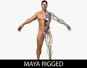 Ultimate Complete Rigged Male 3D model