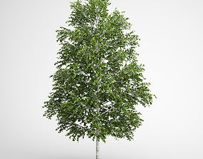 3D CGAxis European White Birch 18