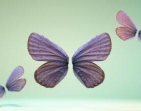 3D asset Butterfly-20