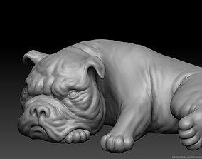 Bull dog 3D model low-poly