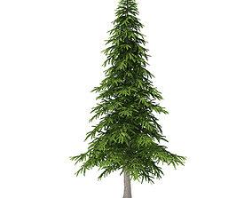 3D model Fir Tree 5point9m