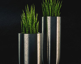 3D model Vases With Sansevieria Cylindrica
