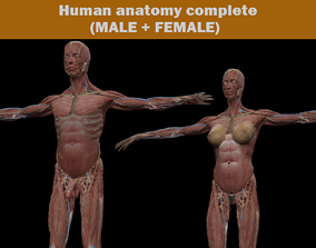 3D Human MALE and FEMALE Complete Anatomy