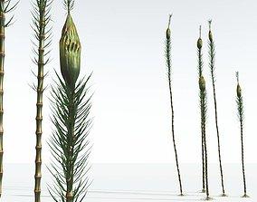 EVERYPlant Suckows Horsetail Tree 04 --16 Models--