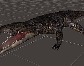 A Crocodile realistic 3d model rigged