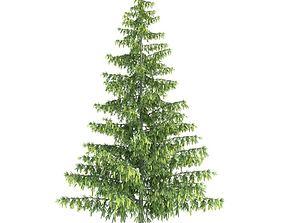 Green Leafy Pinus Tree 3D model