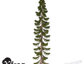 XfrogPlants Serbian Spruce 3D