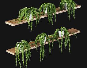 3D Hanging succulents in pots on shelves