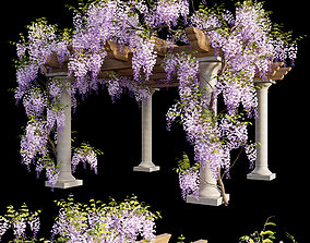 3D model Fabaceae - Wisteria sinensis 05