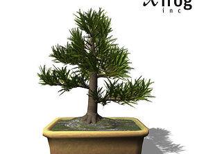 3D model XfrogPlants Japanese Cedar - Bonsai