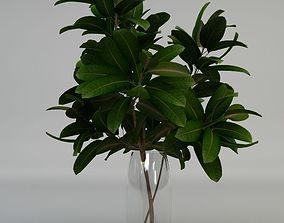 3D Plant pipal