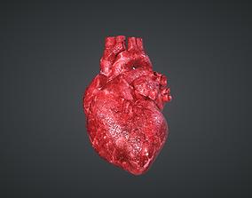 3D asset PBR Human Heart