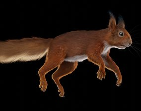 animal red Squirrel 3D