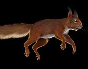 Squirrel fur 3D