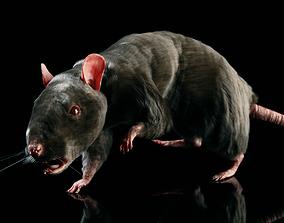 3D model Rat - Realistic