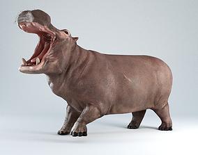 3D model Hippopotamus Rigged