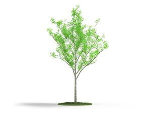 3D Young Green Tree