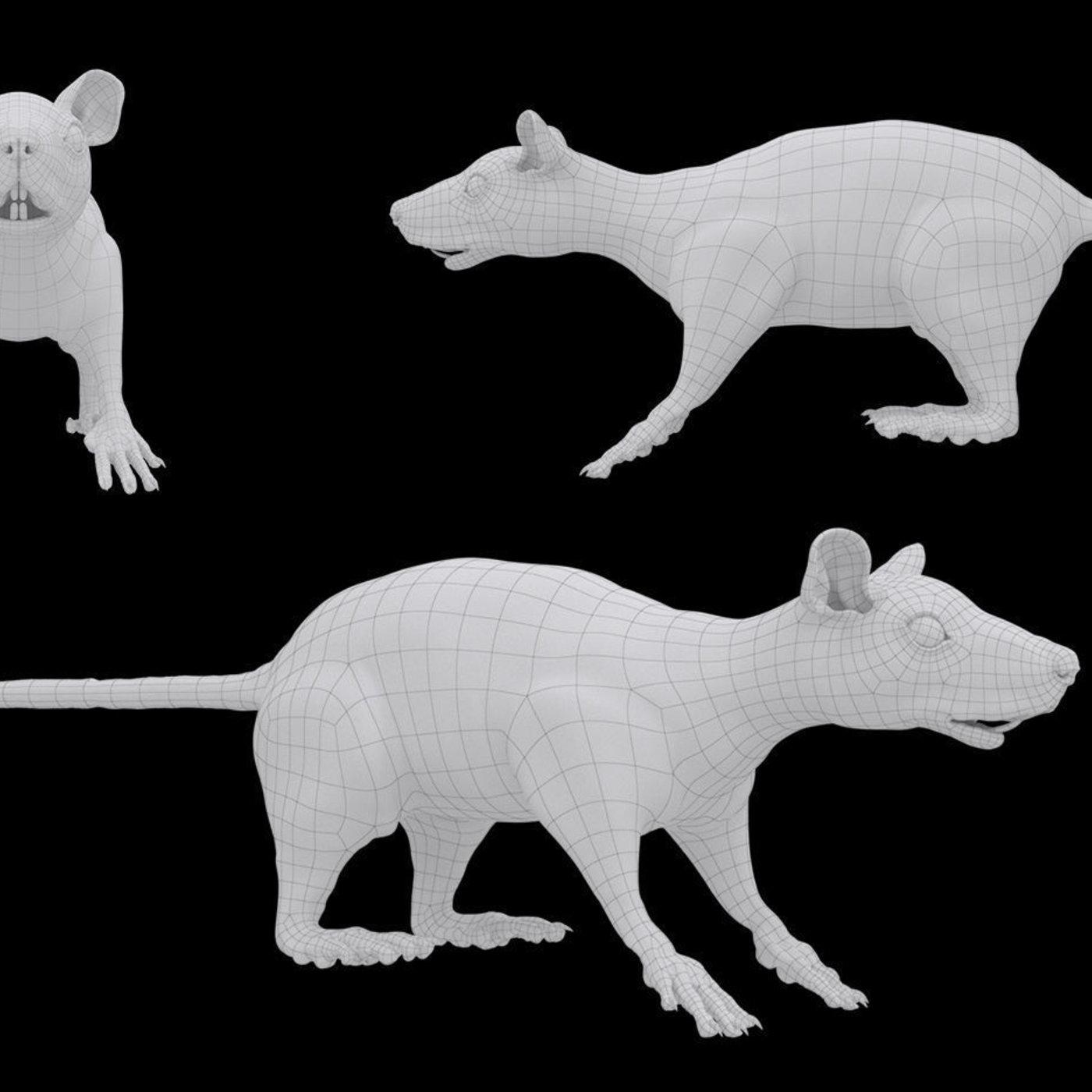 Pine Rat