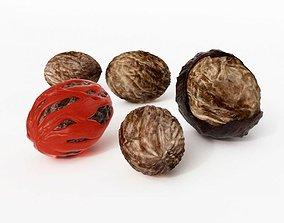 3D model Nutmeg Five Sizes