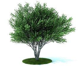 green 3D model Green Leafy Tree