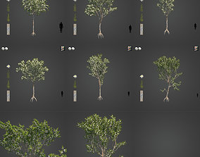 3D model 2021 PBR Angophora Intermedia Floribunda