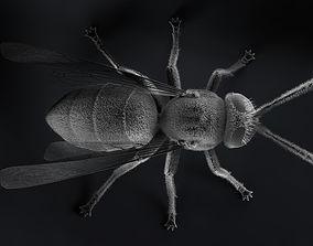 3D model Wasp Micrography PBR and Yeti Maya
