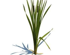 Green Leafy Plant With Cat Tails 3D