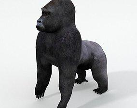 Gorila 3D asset
