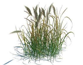 3D model Grass Like Green Plant