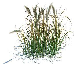3D model Grass Like Green Plant