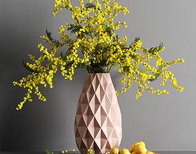 Decorative Mimosa and Lemon 3D model