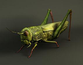 3D 3d grasshopper