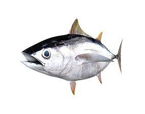 Albacore Tuna Fish Thunnus Alalunga 3D model