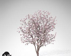 XfrogPlants Saucer Magnolia 3D