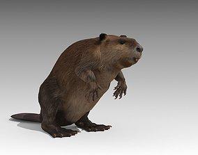 3D asset animated Beaver