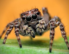 spider 3D printable model