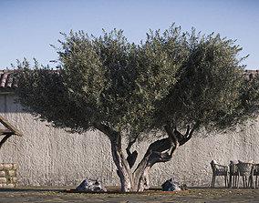 3D model Olive Tree 01 RETOPO