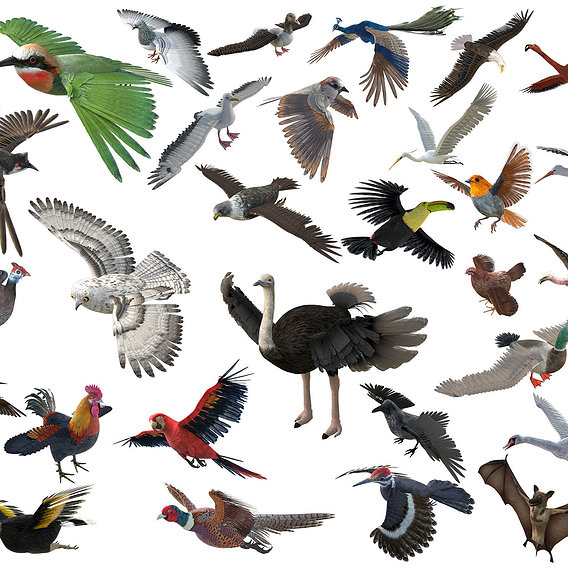 30 PBR Realistic Low poly Rigged Birds Collection