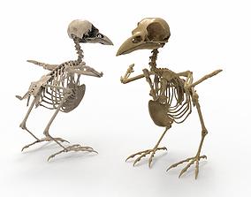 3D model Raven skeleton