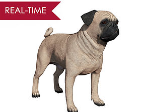 Pug Real-Time 3D asset