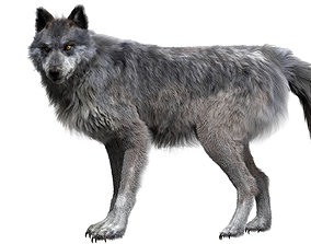Wolf 3dmodel Animated Rigged mammal animated