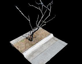 3D model Big Tree birch