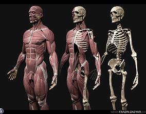 Human Anatomy Kit 3D asset