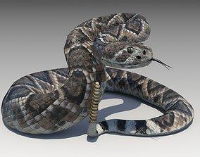 Rattlesnake 3D asset animated