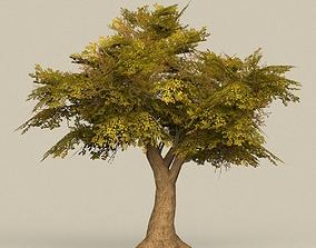 Game Ready Tree 16 3D model