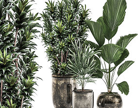 3D model Decorative plants in a flowerpot for interior 1