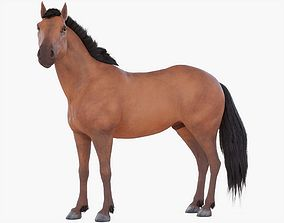 3D Horse Rigged 01